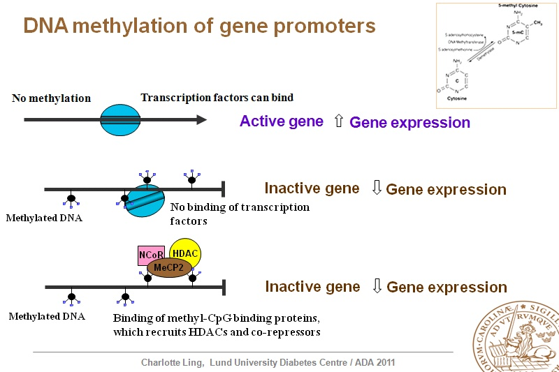 Genetics of complications - Virtual Meeting   EASD